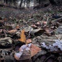 Утро осеннего леса... :: Андрей Войцехов