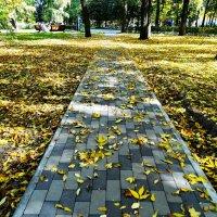 В парке осень. :: vodonos241