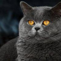 vit5 котомодель :: Vitaly Faiv
