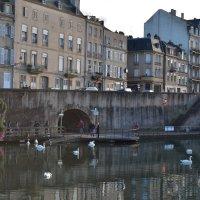 Лебеди в городе :: Татьяна
