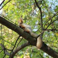 """Да орешки все грызет"" :: Andrey"