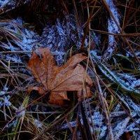 осенний лист на снегу :: Наталья Сазонова