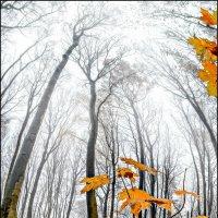 Осень в парке (7). :: Юрий Гординский