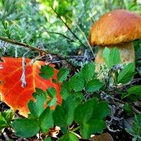 Листочек и грибочек :: Raduzka (Надежда Веркина)