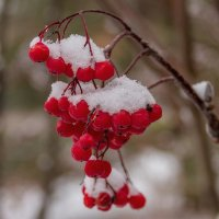 зима пришла... :: Дмитрий Сиялов
