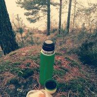 Лесной чай. :: сергей лебедев