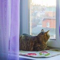 каждая кошка, любит смотреть в окошко :: Петр Беляков