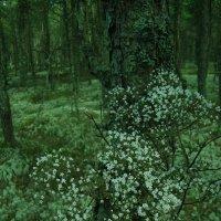Cказка пригородного леса... :: Lilly