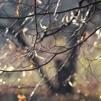 Осенняя прозрачность :: Жанна