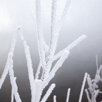 Мороз! :: Вадим Басов