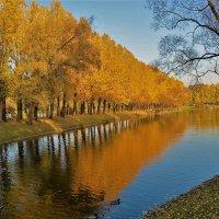 Золото на голубом... :: Sergey Gordoff