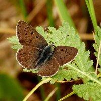 и снова бабочки 5 :: Александр Прокудин