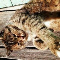 кошка :: Анастасия Игошина