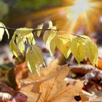 Вспоминая осень золотую.. :: Андрей Заломленков