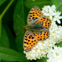 и снова бабочки 8 :: Александр Прокудин