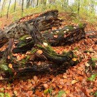 Осень в парке (9). :: Юрий Гординский
