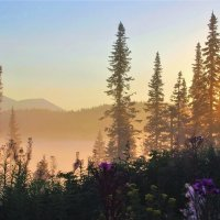 Утреннее солнце :: Сергей Чиняев