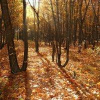 Совсем недавно мы шуршали тут листвой гуляя... :: Андрей Заломленков