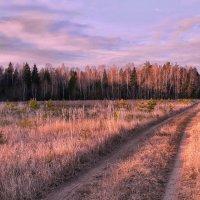 Морозный свет :: Лара Симонова