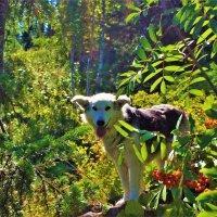 Прогулка по лесу :: Сергей Чиняев
