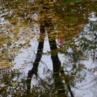 Осенние отражения :: Юрий Велицкий