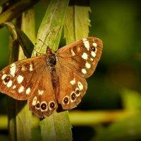 и снова бабочки 22 :: Александр Прокудин