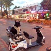 Аренда мотоцикла. Личная охрана входит в стоимость :: Наталья Т