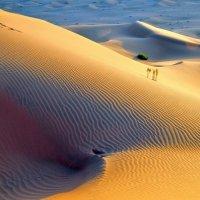 пустая пустыня :: Георгий А