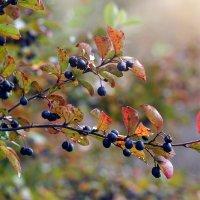 Октябрь в Марфинском парке :: Ольга