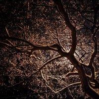 Дерево :: Сергей Малашкин
