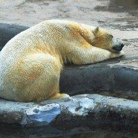 Крепкий сон после купания. :: LIDIA V.P.
