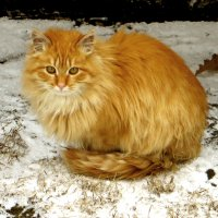 Не люблю зиму... :: Nata
