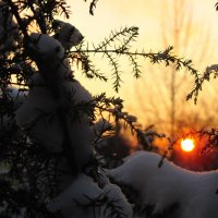 Зимнее солнце :: alek48s