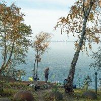 Осень на берегу озера Разлив (01) :: Виталий