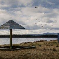 Уносят птицы  на  крыльях  осень. :: Сергей l