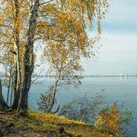 Осень на берегу озера Разлив (07) :: Виталий