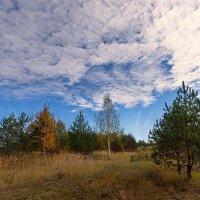 Осенний пейзаж. (Октябрь) :: Елена Струкова