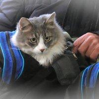 Самый маленький пассажир! :: Татьяна Помогалова
