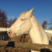 Белый конь :: Татьяна Пальчикова