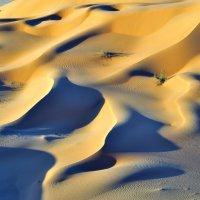 фиолетовые дюны :: Георгий А
