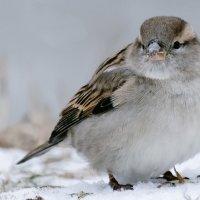 Зима на пороге :: Сергей