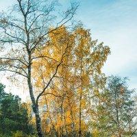Осень на берегу озера Разлив (11) :: Виталий