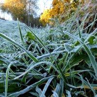 холодное утро :: Heinz Thorns