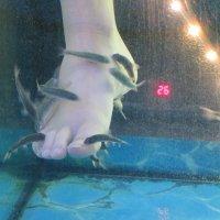 Рыбкам на съедение! :: Natalia Harries