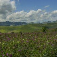 в горах цветы ласкают взор... :: шмакова тамара