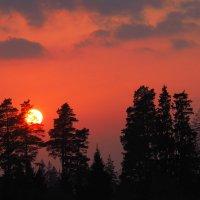 Солнце пряталось за ели. :: Николай Ярёменко