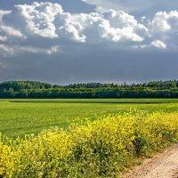 Летние пейзажи. :: Liudmila LLF