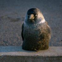 Пингвин :: Андрей Троицкий