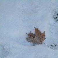 На снегу.. :: Зинаида