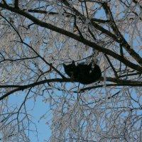 Первый день зимы ... :: Алёна Савина
